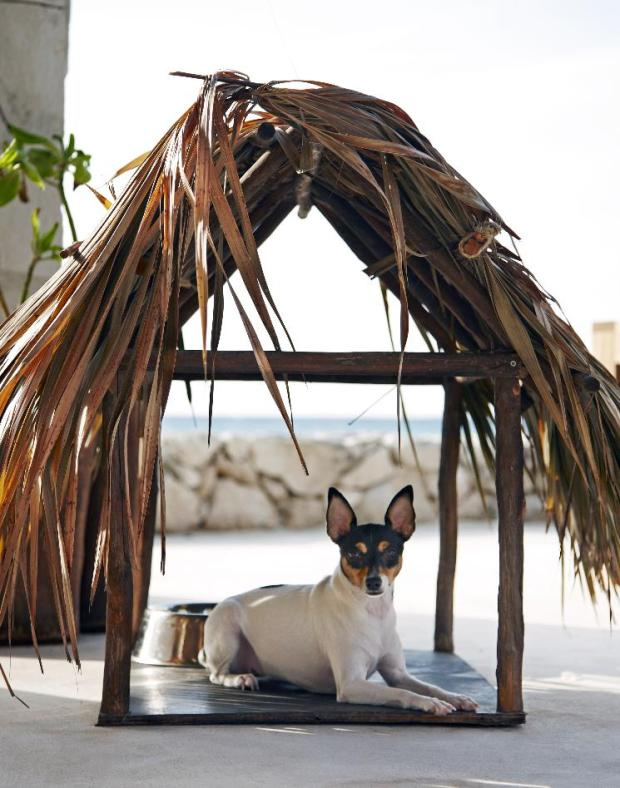 Viceroy_RivieraMaya_dog